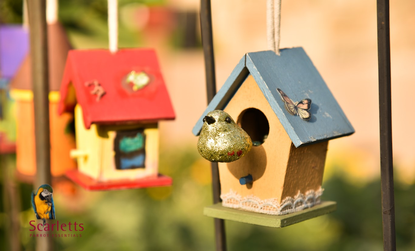 Importance of Toys for Pet Birds