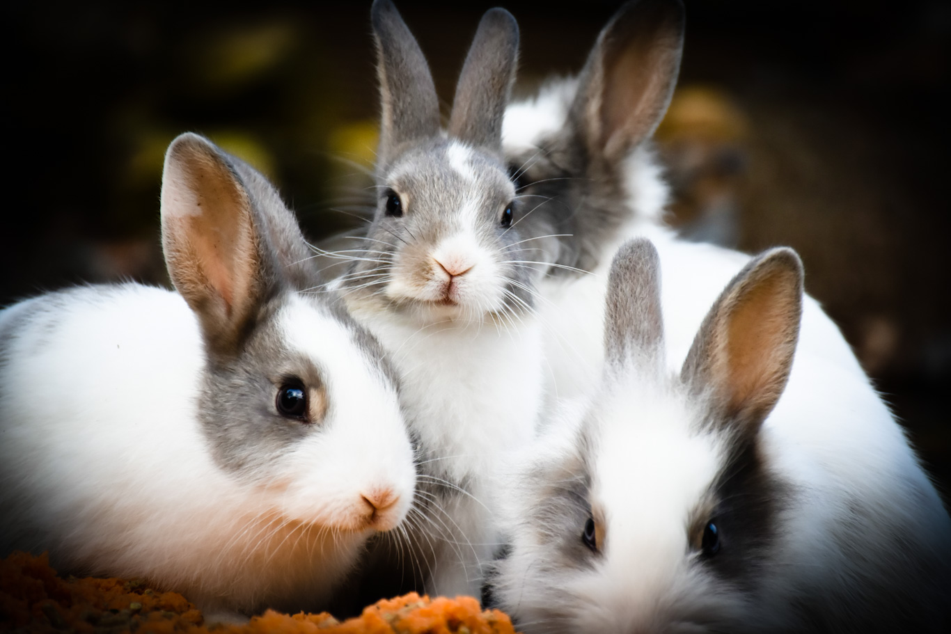 Rabbits with grimy bums.
