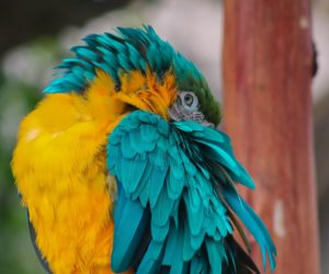 Parrots Lose Their Feathers